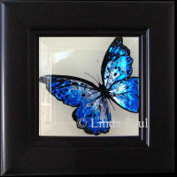 framed butterflies blue