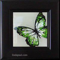 green framed butterfly
